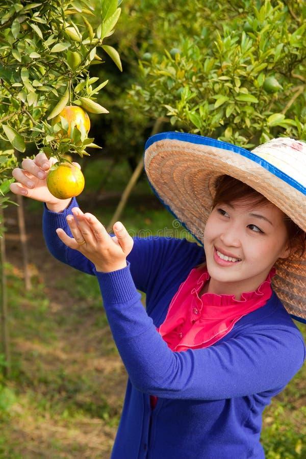 Ragazza del giardiniere in giardino arancione, Nord della Tailandia fotografia stock