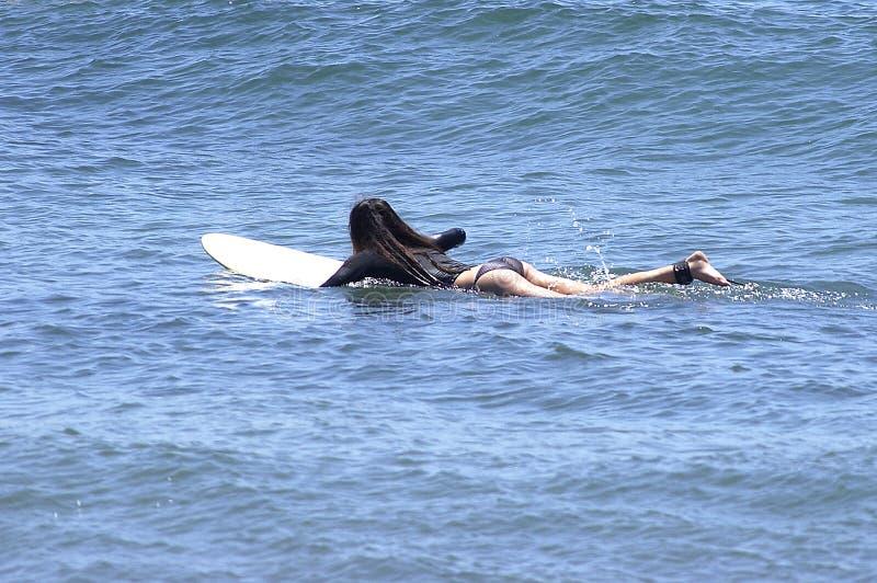 Ragazza del surfista fotografie stock