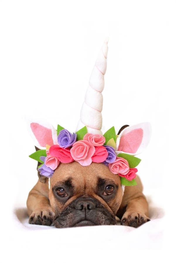 Ragazza di Fawn French Bulldog con la fascia nera dell'unicorno e della maschera con i fiori che si trovano sul pavimento su fond fotografie stock libere da diritti