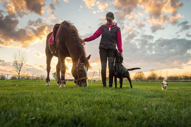 Ragazza e cavallo immagini stock