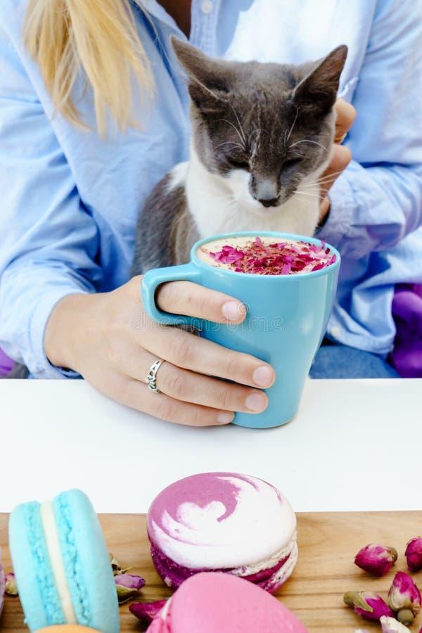 Ragazza e gatto biondi dolci Cappuccino saporito e macarons francesi freschi sulla tavola immagini stock