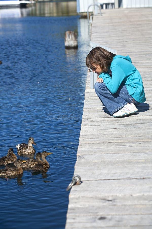 Ragazza ed anatre in acqua. fotografia stock