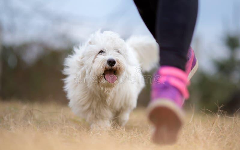 Ragazza ed il suo funzionamento del cane fotografia stock libera da diritti