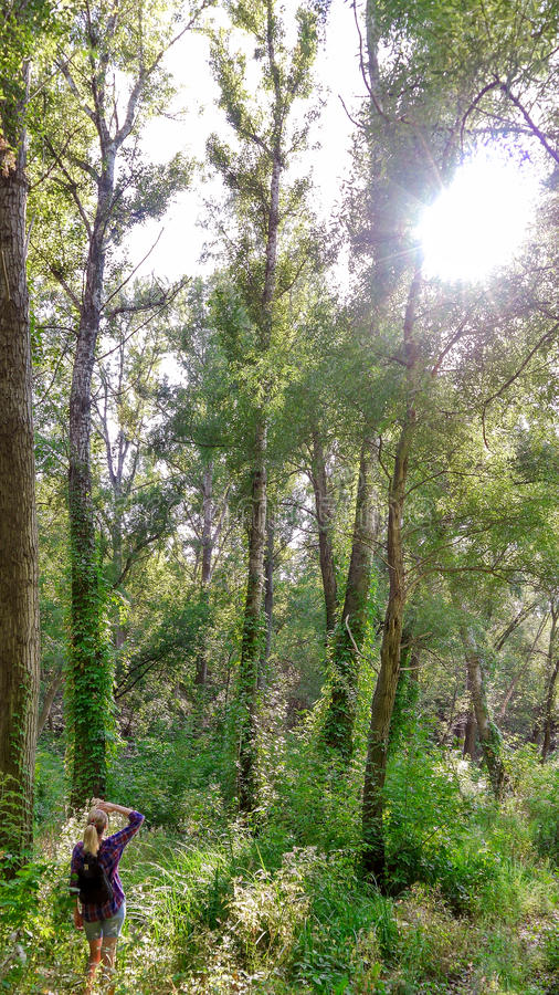 Ragazza Iin gli alberi di Forest Looking At The Tall fotografie stock
