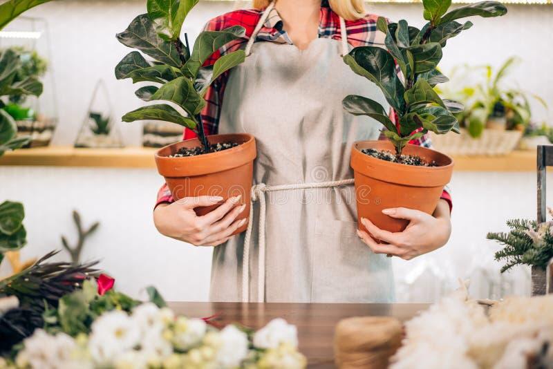 Ragazza ritagliata che tiene piante in vasche fotografia stock libera da diritti