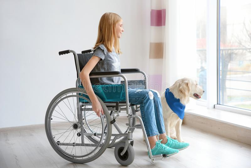 Ragazza in sedia a rotelle con il cane di servizio fotografie stock libere da diritti