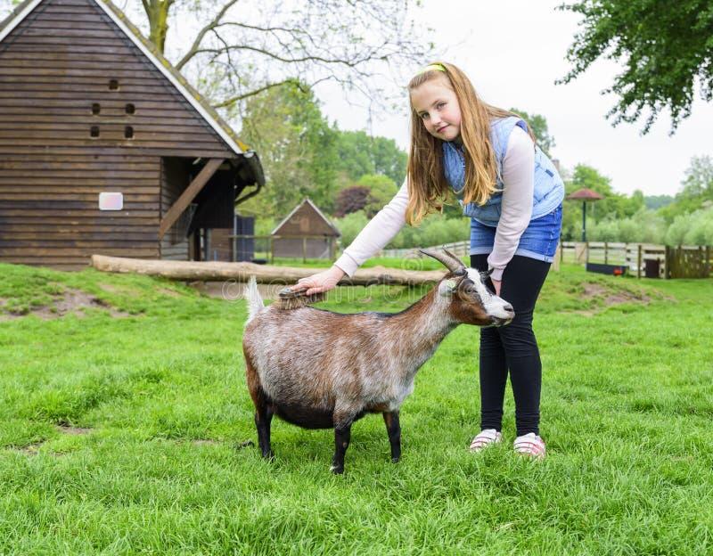 Ragazza su un'azienda agricola che si preoccupa per una capra immagine stock