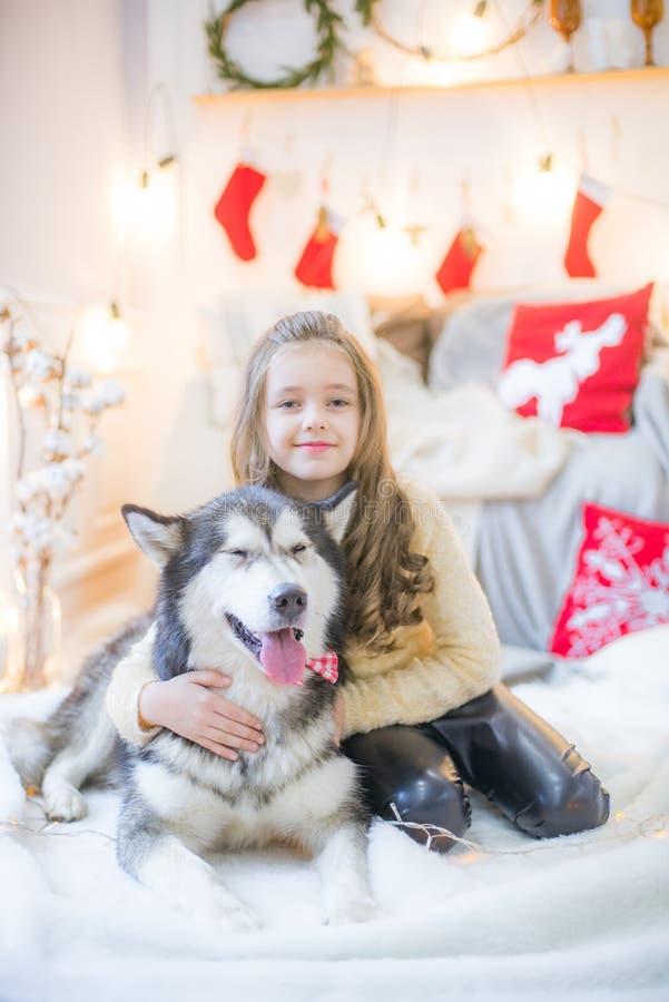 Ragazza sveglia divertendosi a casa con un Malamute del cane a casa in una stanza decorata immagini stock libere da diritti