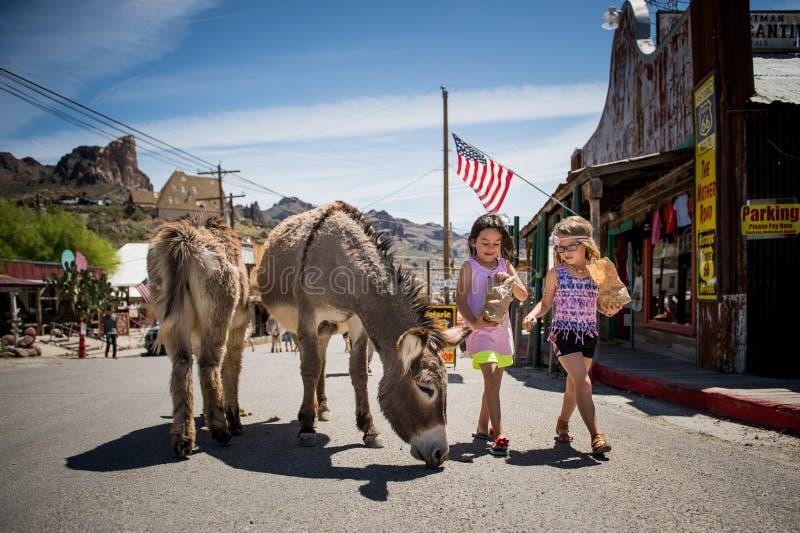 Ragazza sveglia due che alimenta alcuni muli nella città di Oatman su Route 66 in Arizona fotografia stock libera da diritti