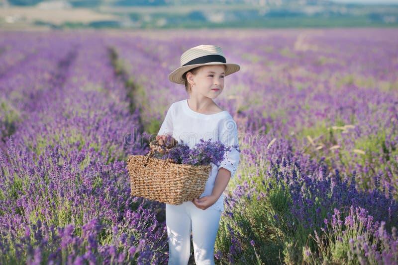 Ragazza in un cappello di paglia in un campo di lavanda con un canestro di lavanda Una ragazza in un giacimento della lavanda Rag fotografia stock libera da diritti