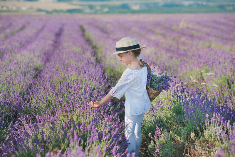 Ragazza in un cappello di paglia in un campo di lavanda con un canestro di lavanda Una ragazza in un giacimento della lavanda Rag fotografia stock