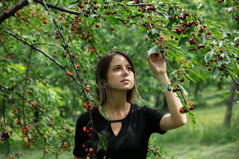 Ragazza in un vestito nero che riunisce un raccolto del ciliegio immagini stock libere da diritti