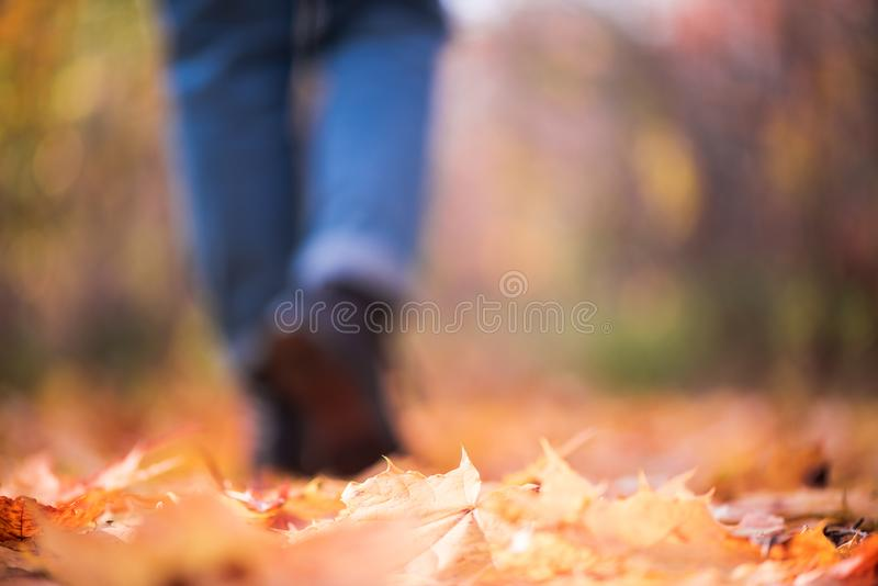 Ragazza vaga in jeans e nelle passeggiate degli stivali nelle gambe di autunno delle donne Unfocused della foresta nella stagione fotografia stock