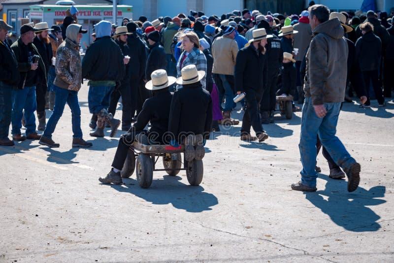 Ragazzi di Amish con il vagone fotografia stock