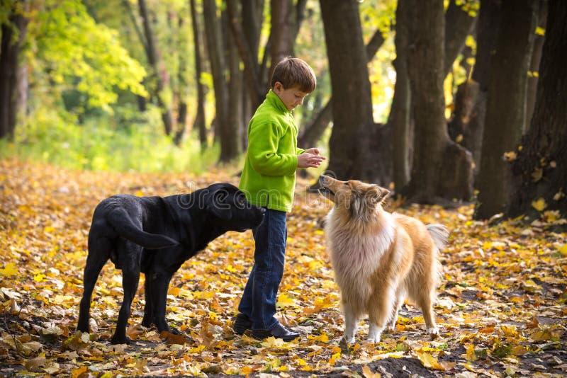 Ragazzino che gioca con due cani sulla foresta di autunno fotografia stock