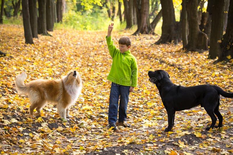 Ragazzino che gioca con due cani sulla foresta di autunno fotografie stock libere da diritti