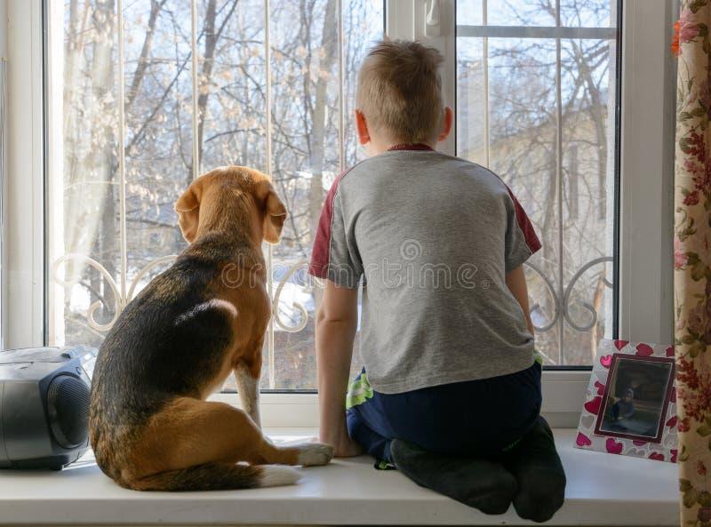 Ragazzino con il suo cane che guarda attraverso la finestra fotografia stock