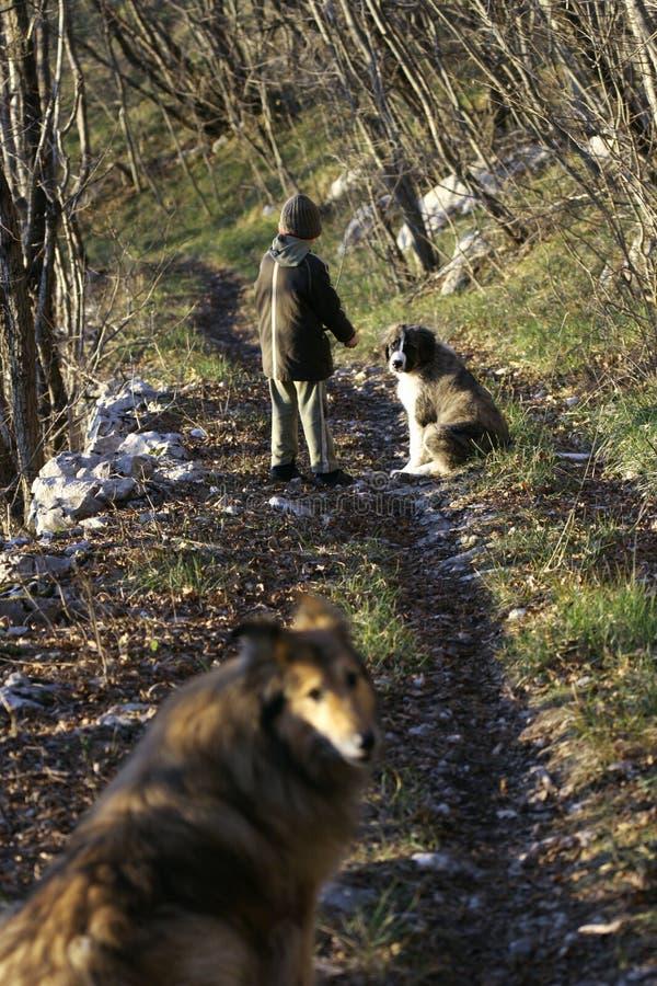 Ragazzino e due cani fotografia stock libera da diritti