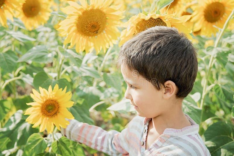 Ragazzo adorabile del bambino sul giacimento del girasole di estate all'aperto Bambino felice che fiuta un fiore del girasole sul fotografia stock