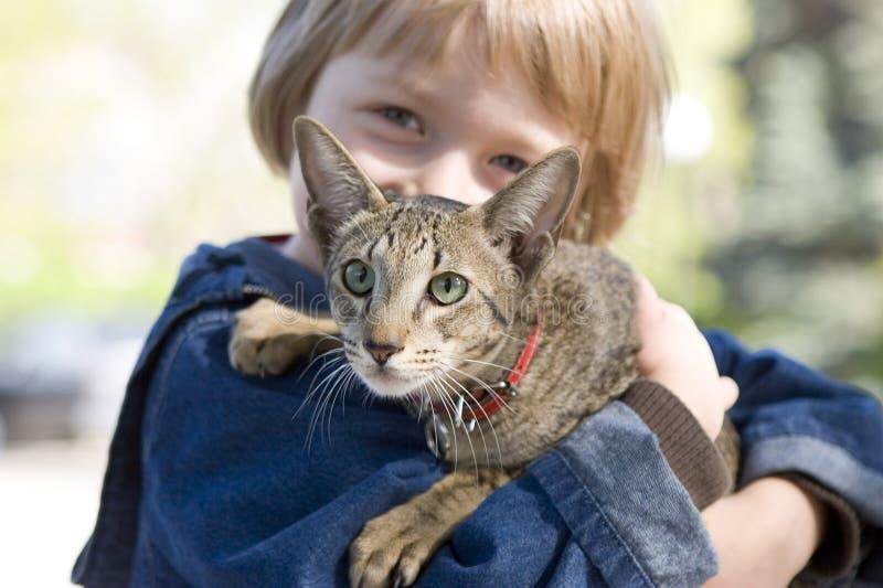 Ragazzo biondo con il gatto allevato orientale immagini stock