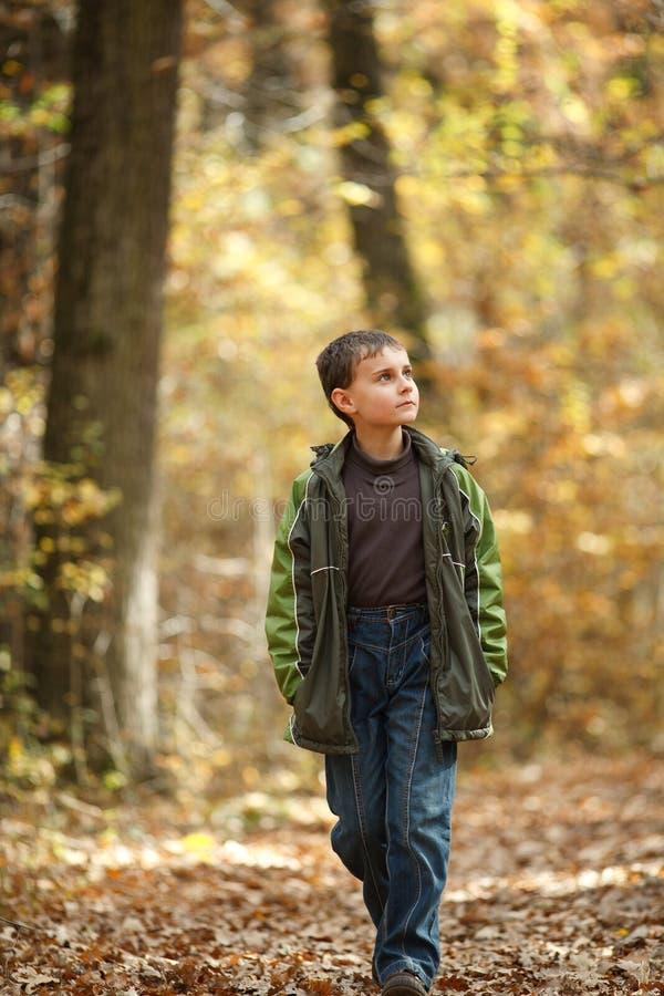 Ragazzo che cammina attraverso la foresta immagine stock libera da diritti