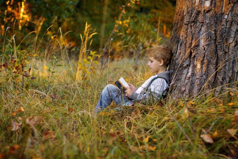 Ragazzo che legge un libro su un grande albero immagini stock libere da diritti