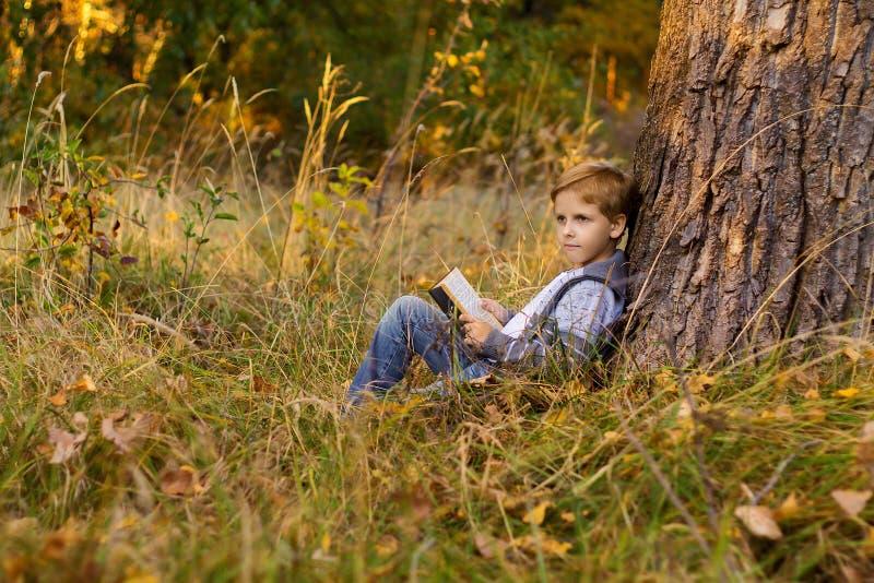 Ragazzo che legge un libro su un grande albero immagine stock libera da diritti