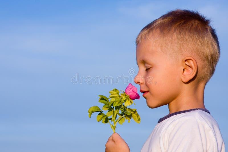 Ragazzo che sente l'odore del fiore di rosa immagini stock