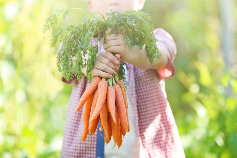 Ragazzo che tiene le carote fresche immagine stock libera da diritti