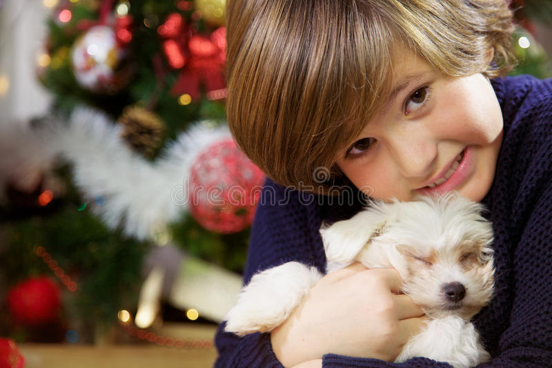 Ragazzo che tiene poco cucciolo di cane che sorride davanti al primo piano dell'albero di Natale fotografia stock