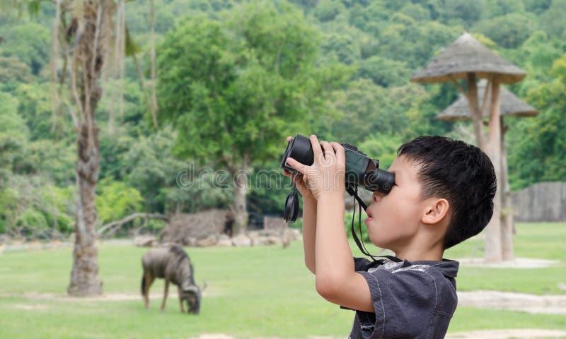 Ragazzo che utilizza il binocolo nello zoo fotografia stock