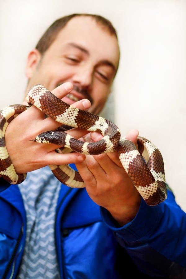 Ragazzo con i serpenti L'uomo tiene nel genere comune di getula del Lampropeltis del serpente di re del rettile delle mani di ser immagini stock