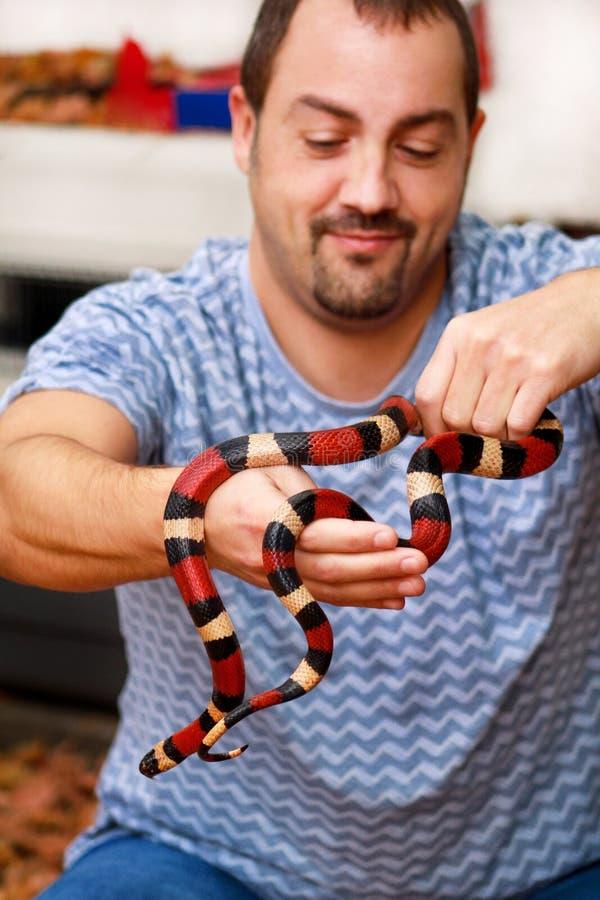 Ragazzo con i serpenti L'uomo tiene nel genere dell'Arizona di triangulum del Lampropeltis del serpente di latte del rettile dell fotografia stock libera da diritti