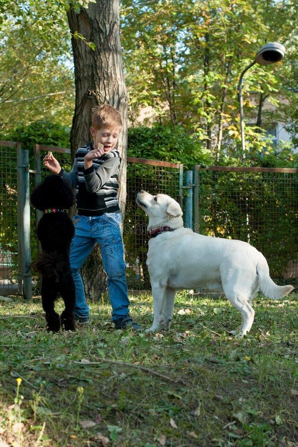 Ragazzo con un barboncino e un Labrador fotografia stock libera da diritti