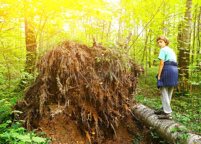 Ragazzo del Preteen nell'albero caduto salita della foresta immagine stock