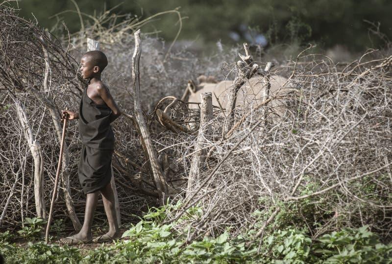 Ragazzo di Maasai che raduna le mucche immagine stock