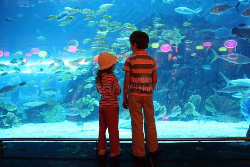 Ragazzo e ragazza in traforo subacqueo dell'acquario fotografia stock libera da diritti