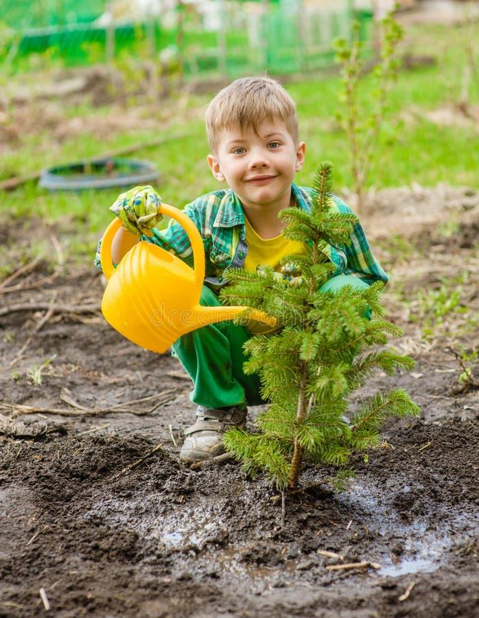 Ragazzo felice che innaffia l'albero piantato fotografie stock libere da diritti