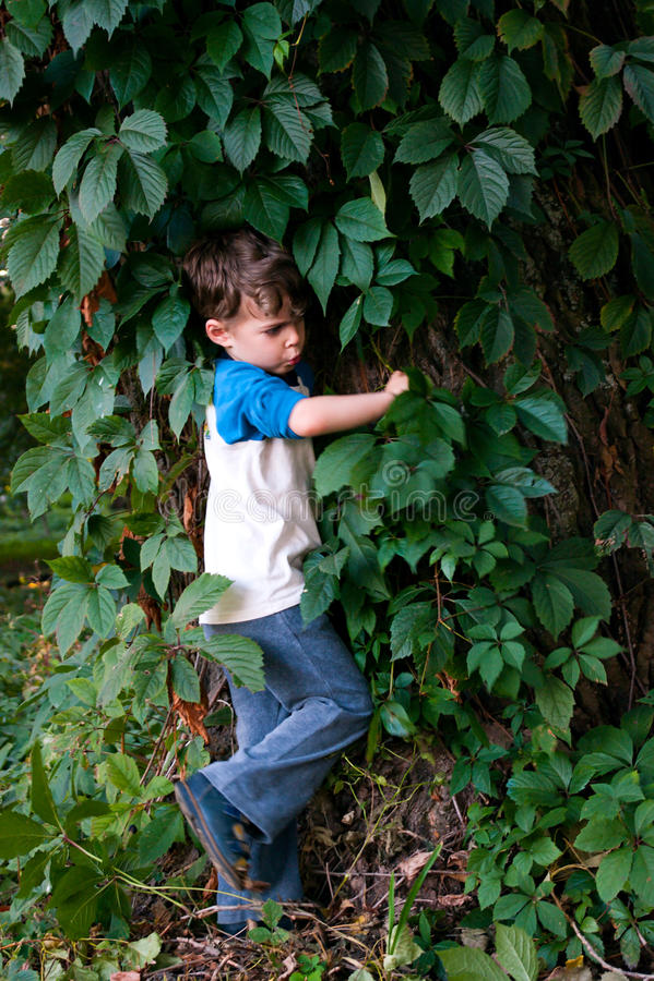 Ragazzo fra il fogliame dell'uva selvaggia fotografie stock