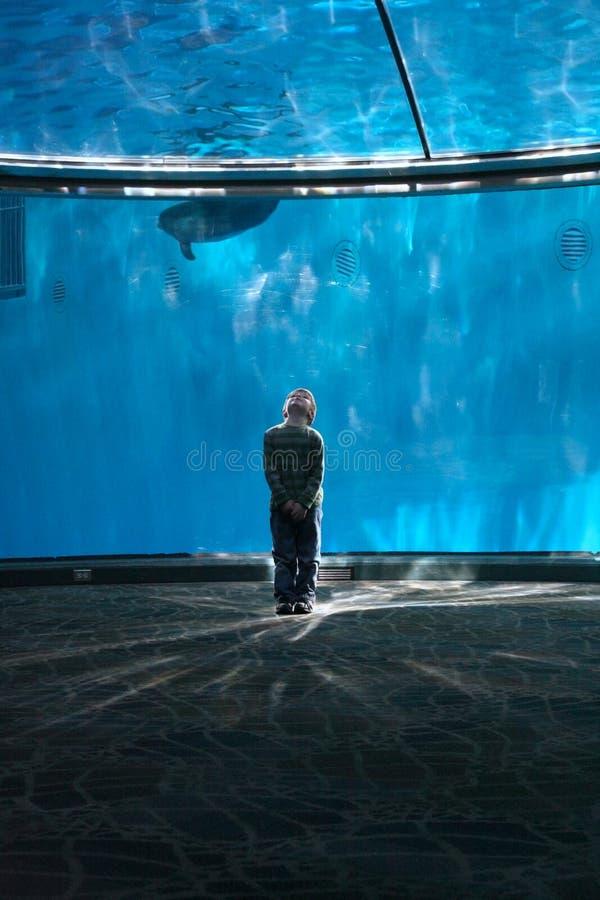 Ragazzo nella cupola del delfino fotografia stock