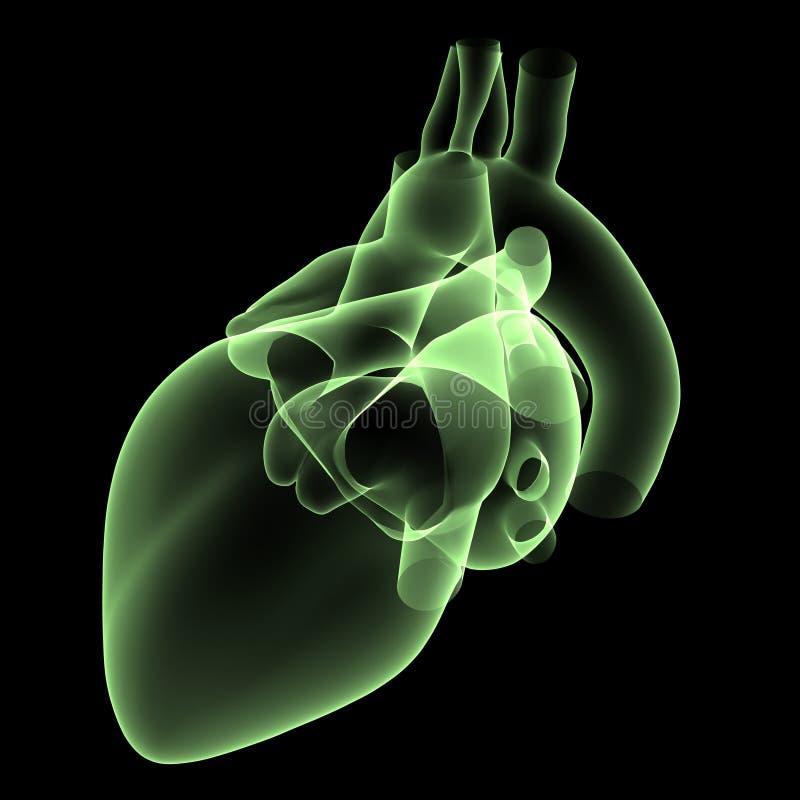 Raggi X 2 del cuore royalty illustrazione gratis