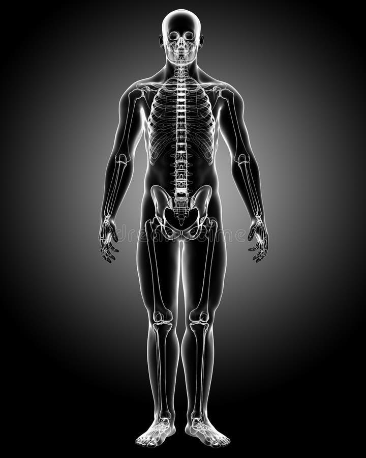 Raggi x del corpo maschio illustrazione vettoriale