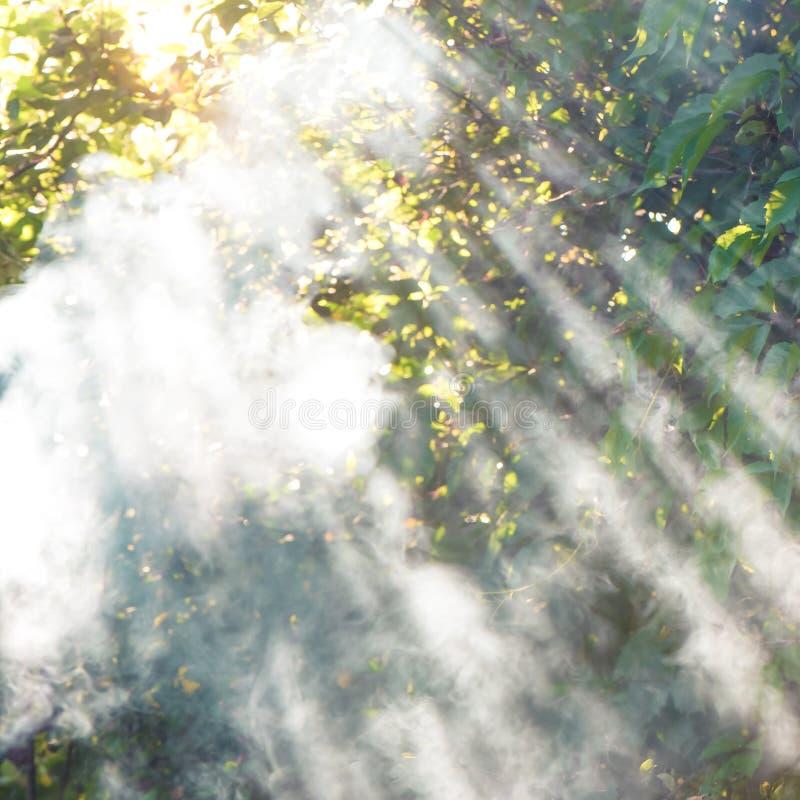raggi del sole che viene attraverso il fumo sul fallo di estate g immagine stock