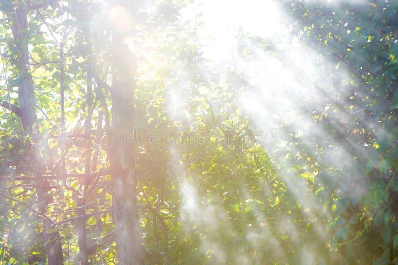 raggi del sole che viene attraverso il fumo sul fallo di estate g fotografia stock