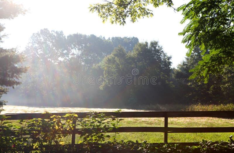 Raggi del sole di primo mattino immagine stock