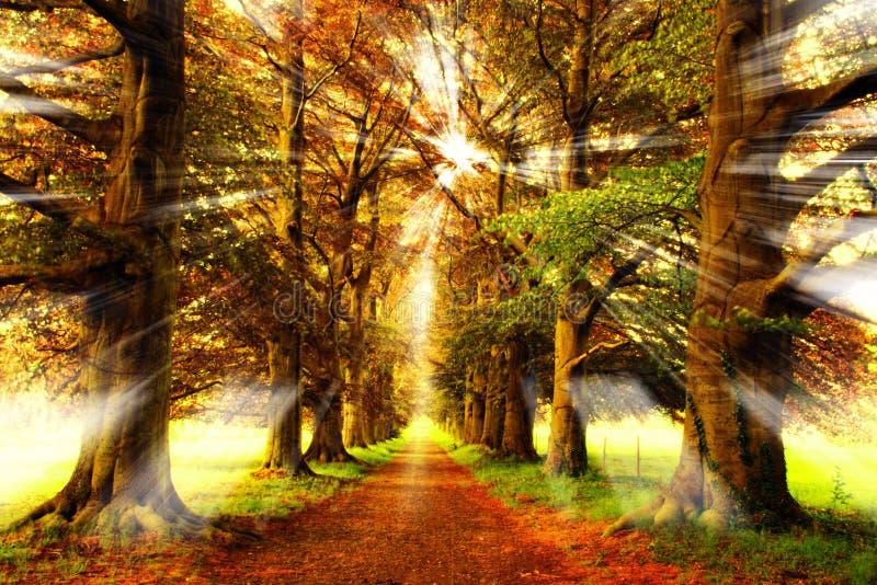 Raggi della foresta immagini stock