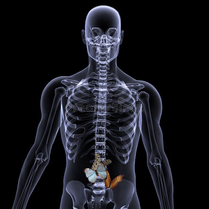 Raggi X di scheletro - farfalle in vostro stomaco royalty illustrazione gratis