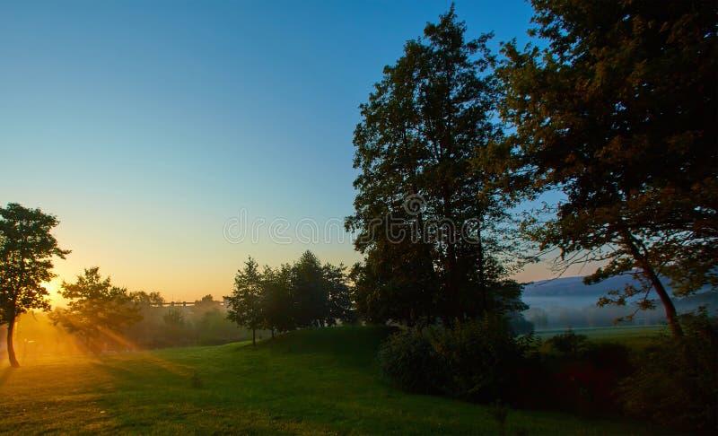 Raggi di sole che prendparteono alla foresta decidua su una mattina nebbiosa di estate immagine stock libera da diritti