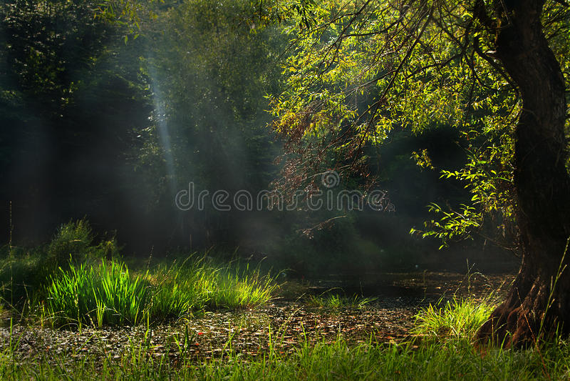 Raggi di sole di mattina immagini stock libere da diritti