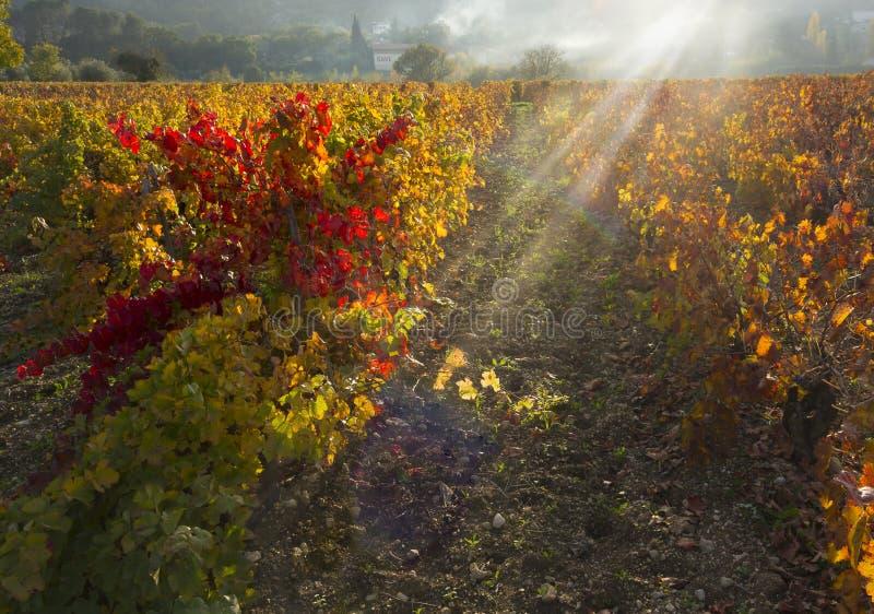 Raggi di sole e foschia sulla vigna colorata fotografia stock libera da diritti